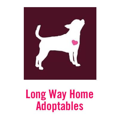 Long Way Home Adoptables